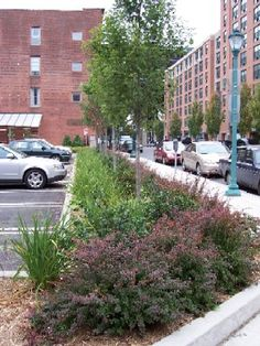 Boston Landscaped Edge B W Parking Lot And Sidewalk From Local Ecologist Blo