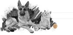 """Desde Indiproweb os presentamos nuestro nuevo trabajo de diseño web realizado para la empresa leonesa """"Pets World"""" dedicada a la venta de Productos Zoosanitarios y Alimentación para animales. www.petsworld.es"""