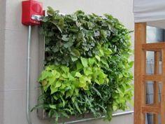 green-living-walls-installer-company-5