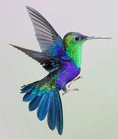 e066d3f21f453809f01e06221e1af628--colorful-hummingbird-tattoo-the-hummingbird.jpg (500×591)