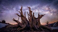 This Other World  © Marc Adamus  4 vertical 14mm shots stitched here for a 140-degree field of view across the Milky Way, photographed from my campsite at 3,500 meters in California's White Mountains in winter, where I was backpacking for 10 days, looking at the trees. This particular tree is probably about 2500 years old and 1000 years dead. It measured about 5 meters across. Although it doesn't look it, it was a beautifully crisp -15C when this photo was taken.