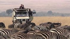 The Serengeti, East Africa's eternal paradise, with its endless expanses and wild animals, makes one feel as though evokes a sense of having arrived in an ap. Wild Animals Videos, Funny Animal Videos, Videos Funny, Tanzania, Kenya, Serengeti National Park, East Africa, Documentaries, National Parks