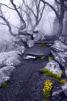 Fog on the Betty's Rock trail Shenandoah National Park by Jon Bilous