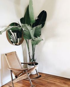 statement plant + modern accessories