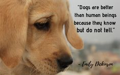 """""""Dogs are better than human beings because they know but do not tell."""" - 30 Inspiring Dog Quotes That Will Surely Melt Your Heart Love You More Than, Love Can, Little Puppies, Puppies For Sale, I Love Dogs, Puppy Love, John Grogan, Gerald Durrell, Puppy Quotes"""