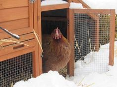 The Big Problem with Backyard Chicken Coops — Food News Raising Backyard Chickens, Backyard Chicken Coops, Diy Chicken Coop, Keeping Chickens, Pet Chickens, Rabbits, Chicken To Go, Chicken Pen, Chicken Ideas