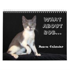 What About Bob Kitten Calendar - Encore Edition - cat cats kitten kitty pet love pussy