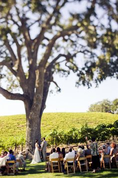 Simple Weddings: 10 Ways to Keep it Simple & Special... IF ONLY I COULD FIND A TREE LIKE THIS!