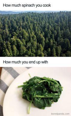 Vegan Memes, Vegan Humor, Vegan Funny, Vegan Pregnancy, Meat Diet, Why Vegan, Vegan Lifestyle, Healthy Choices, Kids Meals