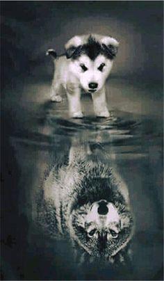 """Eu n sei se boto na minha pasta """"cães"""" ou na pasta """"lobos"""" tô em duvida pessoas"""