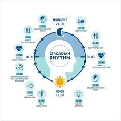 Jet Lag, Sleep Phases, Circadian Rhythm Sleep Disorder, How To Regulate Hormones, Body Clock, Shift Work, National Sleep Foundation, Central Nervous System, Psychology Today