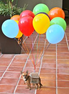 This would be really cute and doable except for the fact that my dog is terrified of balloons
