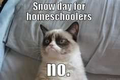 grumpy cat dosent like Homeschoolers!