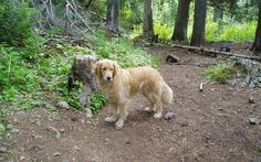 A Basic Guide to Hiking with Dogs - Top Dog Tips