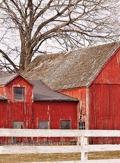 Love the tree behind this barn