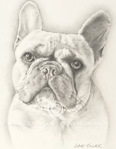 New Pencil Portrait recently commissioned - French Bulldog