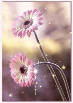 RUMA♥ Flower Animation