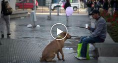 O Dia Em Que Alguém Aproximou Os Cães Abandonados Das Pessoas Que Passam Por Eles Na Rua
