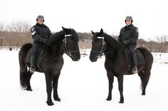 WRPS horses