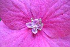 Flowers From My Garden #58