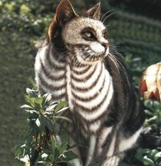 30 Awesome Dog And Cat Halloween Costumes [SLIDESHOW & 27 best Animal Costumes images on Pinterest | Animal costumes Funny ...