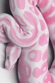 Pink sneak ❤.❤