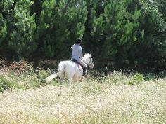 Equine Trader Vetpro Photo of the Week - Lesley Hillson