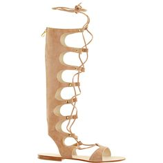 CORNETTI LLC Conca Gladiator Knee High Sandal ($395) ❤ liked on Polyvore featuring shoes, sandals, flat sandals, orzo, multi color sandals, lace-up sandals, lace up gladiator sandals and roman sandals