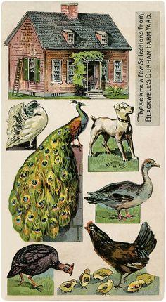 Vintage Farm Images