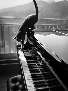 Kexxbloxx - Kathy - kinoaida: cat on the piano - at my mot .-Kexxbloxx – Kathy — kinoaida: cat on the piano – at my mother's… Cat Crazy Cat Lady, Crazy Cats, I Love Cats, Cool Cats, Kittens Cutest, Cats And Kittens, Gatos Cats, Photo Chat, Black And White Aesthetic