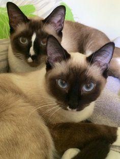 Kočičky :3