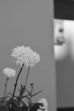 #ViernesNikonista teléfono y flores