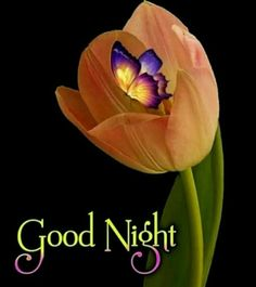 Beautiful Good Night Images, Cute Good Night, Good Night Gif, Good Night Sweet Dreams, Good Night Moon, Good Night Quotes, Good Morning Images, Good Evening Wishes, Good Night Wishes