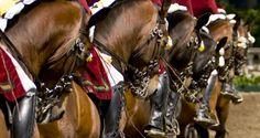 escola equestre portuguesa - Pesquisa do Google