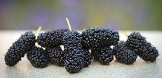 Jedna z možností, ako množiť stromy a rastliny s malými semenami - OZ Biosféra Blackberry, Fruit, Food, Essen, Blackberries, Meals, Yemek, Rich Brunette, Eten