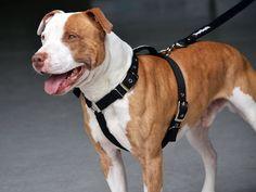 Dog Harness - SupaTuff Slimline