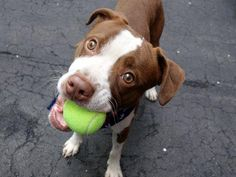 CAN YOU PLS RETWEET ME? WITHOUT YOUR HELP I WILL DIE TODAY GASKET 1YR #NYC DEATHROW 5/17 http://nycdogs.urgentpodr.org/gasket-a1034815/… … …
