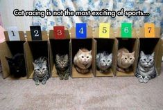 Cat Racing Is Not The Most Exciting Of Sports cute memes animals cat cats adorable animal kittens pets meme kitten funny animals Funny Cute, Funny Memes, Funny Videos, Funny Pics, Funny Stuff, That's Hilarious, Funny Captions, Funniest Memes, Funny Cats