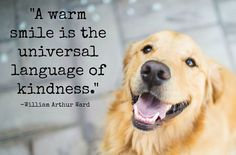 #wordsofwisdom #kindness