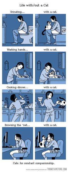 Life with a cat…thankfully I don't have to worry about the counters, but the rest is so true!