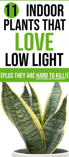 These are the best low light indoor house plants. If you love indoor gardening . : These are the best low light indoor house plants. If you love indoor gardening … These are the best low light indoor house plants. If you love indoor gardening … Cactus House Plants, Easy House Plants, House Plants Decor, Plant Decor, Large Indoor Plants, Indoor Cactus, Trees For Front Yard, Outdoor Gardens, Indoor Gardening