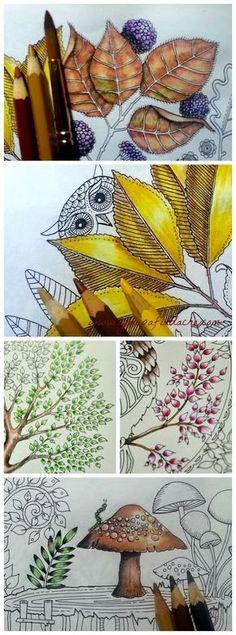 Atelier Gina Pafiadache: Jardim Secreto - Secret Garden - Colorindo folhas com lápis de cor