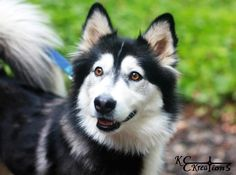 Looks like a husky border collie mix... my two favorite doggies in one! So beautiful!