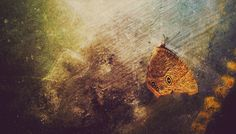 Butterfly to dust by Aniket Goswami on 500px