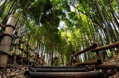 森 - Google 検索 Texture, Wood, Google, Crafts, Surface Finish, Manualidades, Woodwind Instrument, Timber Wood, Trees
