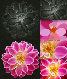 Flower sketch and illustration