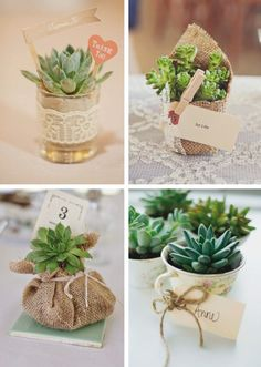 Fun And Eco-Helpful Solutions To Remodel Your Yard Souvenir Con Suculentas Succulent Wedding Favors, Edible Wedding Favors, Party Favors, Wedding Flowers, Wedding Plants, Edible Favors, Wedding Reception Favors, Wedding Table Centerpieces, Table Cadeau