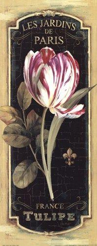 Les Jardins De Paris, France Tulip.