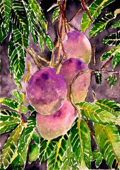 Image: Derek McCrea - Mango Tree
