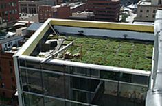 The building's modular green roof system is planted with sedum and will reduce storm water pollution, minimize heat-island effect, and absorb carbon dioxide.